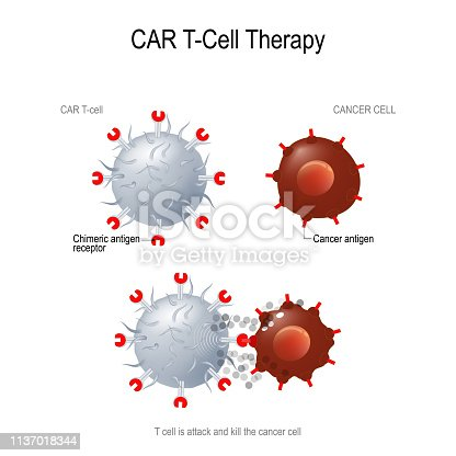 CAR T immunotherapy. Artificial T cell receptors are proteins that have been engineered for cancer therapy (killing of tumor cells). genetically engineered. Vector diagram for medical, educational and science use