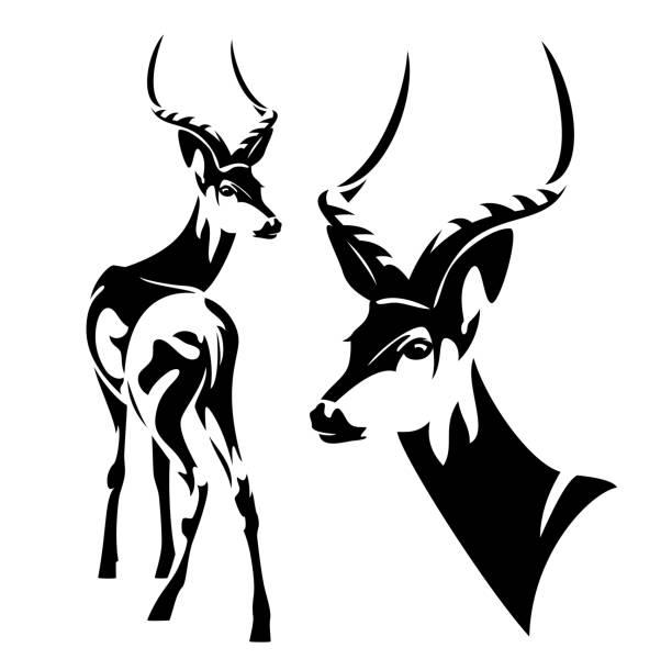 stockillustraties, clipart, cartoons en iconen met impala antelope zwarte vector ontwerpset - antilope