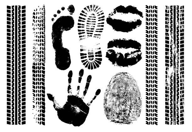 ilustrações de stock, clip art, desenhos animados e ícones de imprint set evidence. handprint, footprint, fingerprint, print of the lips, tire tracks. isolated silhouette vector on white background - feet hand