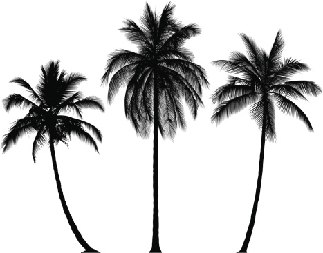 Incredibly Detailed Palm Trees