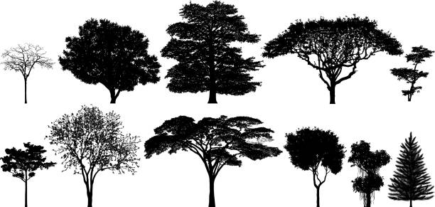 Incredibly Detailed Tree Silhouettes vector art illustration