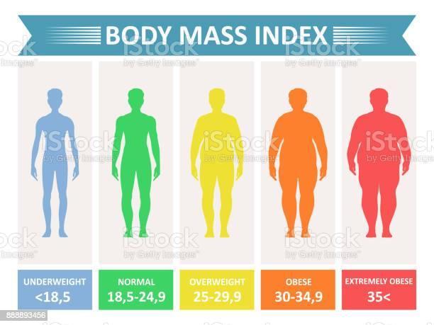 Index mass body vector id888893456?b=1&k=6&m=888893456&s=612x612&h=uvtxniwbscfdsxoubddbw2u2nca1zl4 bc1arkrcr q=