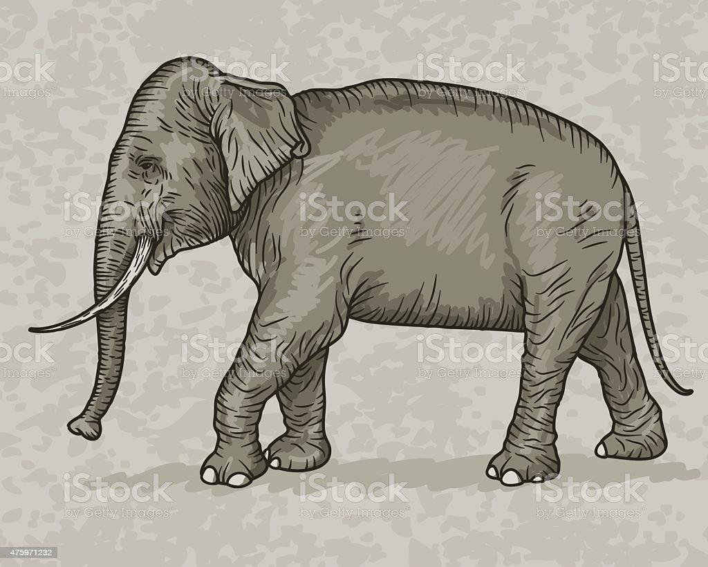 Indian Elephant Vintage Sketch Style vector art illustration
