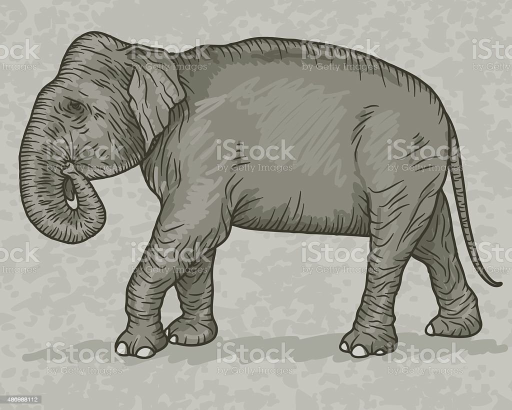 Indian Elephant Vintage Sketch Style vector art illustration