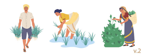 Indian farmer character set, vector flat isolated illustration Indian farmer male and female character set, vector flat isolated illustration. People planting rice seedlings and picking tea leaves. Indian farming industry. picking harvesting stock illustrations
