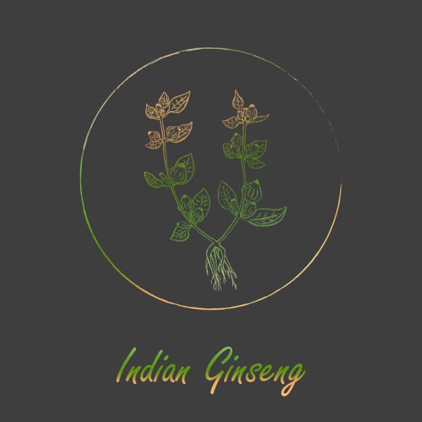 indische ginseng pflanze gefärbt mit farbverlauf mit rahmen - schlafbeere stock-grafiken, -clipart, -cartoons und -symbole
