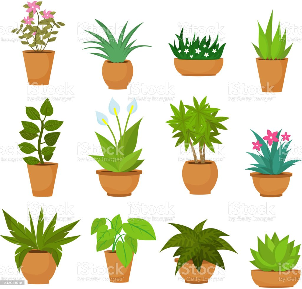 Indoor and outdoor landscape garden potted plants isolated on white. Vector set royalty-free indoor and outdoor landscape garden potted plants isolated on white vector set stock illustration - download image now