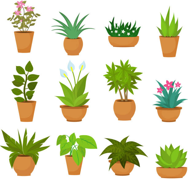 Indoor and outdoor landscape garden potted plants isolated on white. Vector set Indoor and outdoor landscape garden potted plants isolated on white. Vector set green plant in pot, illustration of flowerpot bloom potted plant stock illustrations