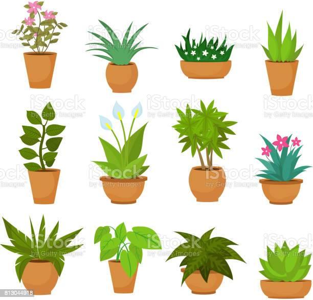 Indoor En Outdoor Landschap Tuin Potplanten Op Wit Wordt Geïsoleerd Vector Set Stockvectorkunst en meer beelden van Beschrijvende kleur