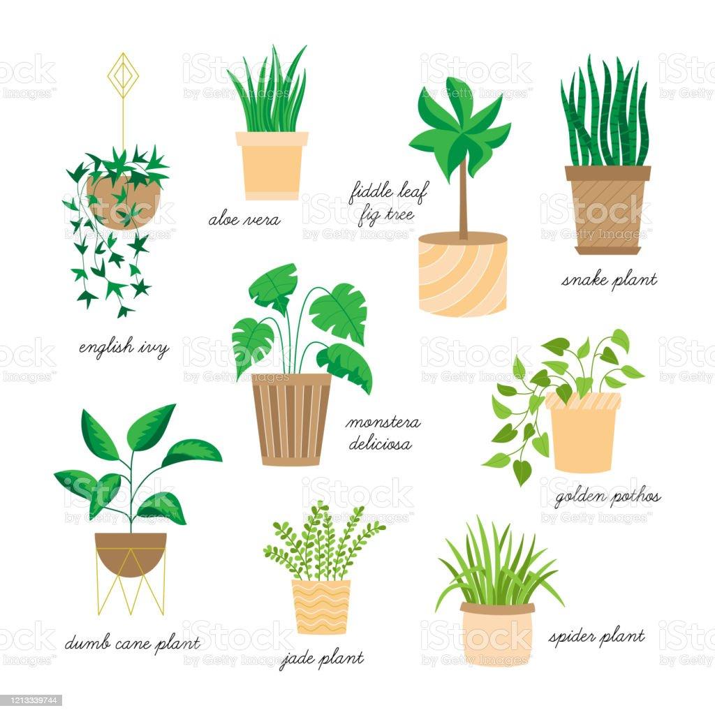 Indoor Houseplants Vector Set Stock Illustration Download Image Now Istock