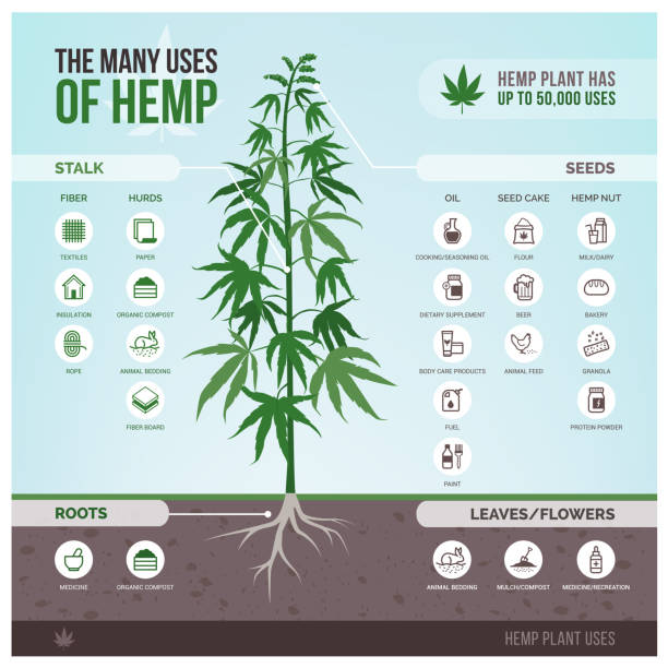 Industrial hemp uses and products vector art illustration