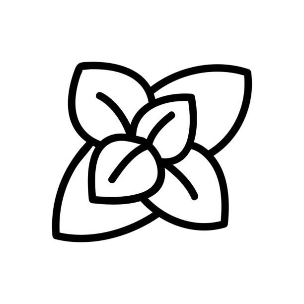 blütenstand der duftenden oregano-symbolvektor-umriss-illustration - blütenstand stock-grafiken, -clipart, -cartoons und -symbole