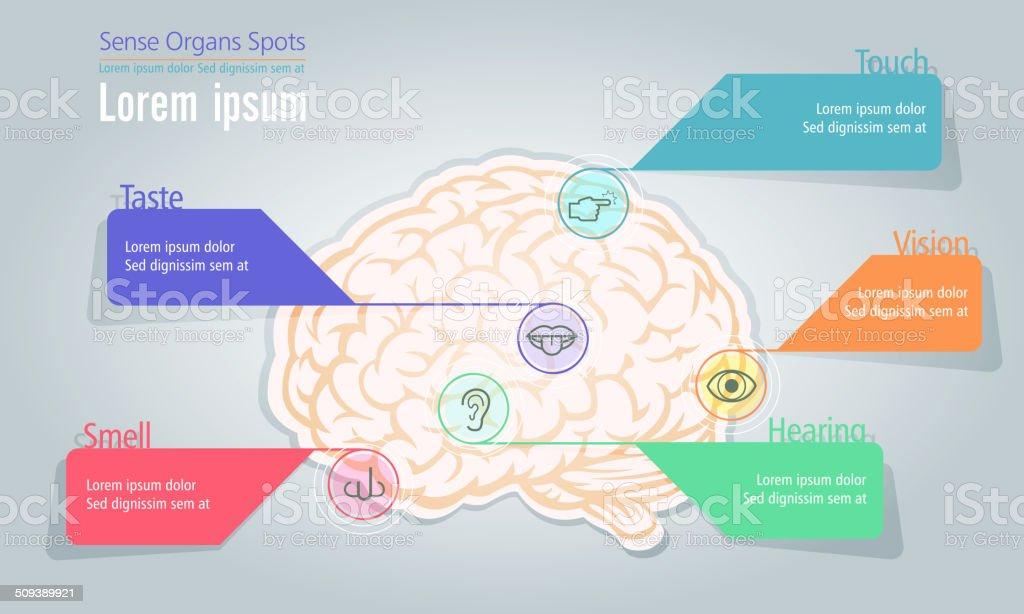 Info Grafik Gefühl Organe Lage Im Menschlichen Gehirn Stock Vektor ...