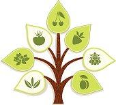 Info tree