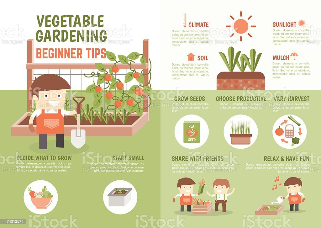 infographic how to grow vegetable beginner tips vector art illustration