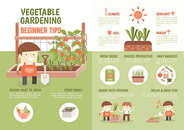 ilustrações, clipart, desenhos animados e ícones de infográfico como a crescer legumes dicas para iniciantes - horta