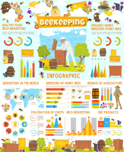 illustrazioni stock, clip art, cartoni animati e icone di tendenza di infographic of beekeeping, statistics with charts - impollinazione