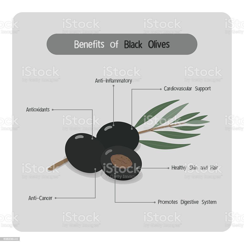 Infographic of black olive benefits vector art illustration