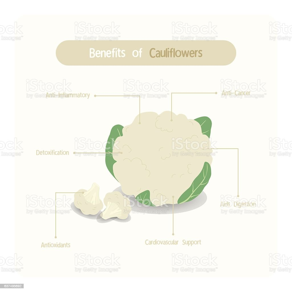 Infographic of cauliflower benefits vector art illustration