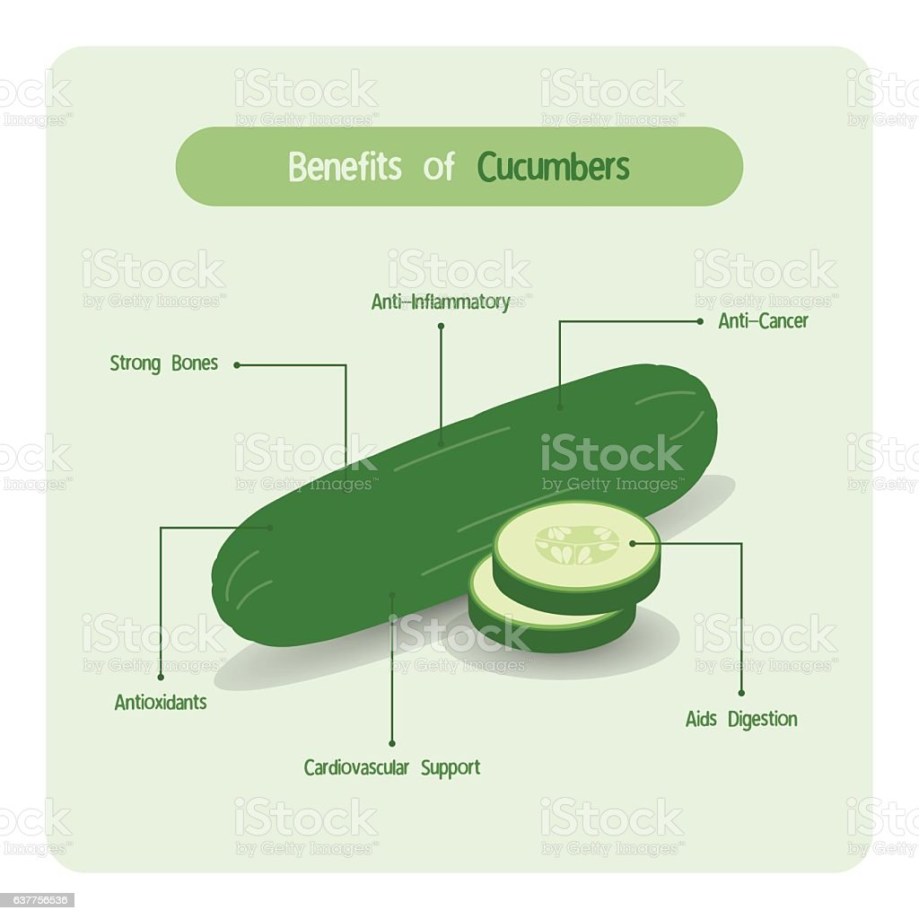 Labeled Diagram Of A Cucumber Search For Wiring Diagrams
