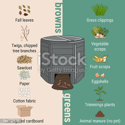 istock Infographic of garden composting bin with scraps. What to compost. Green and brawn ratio for composting. Recycling organic waste. Sustainable living concept 1301021761
