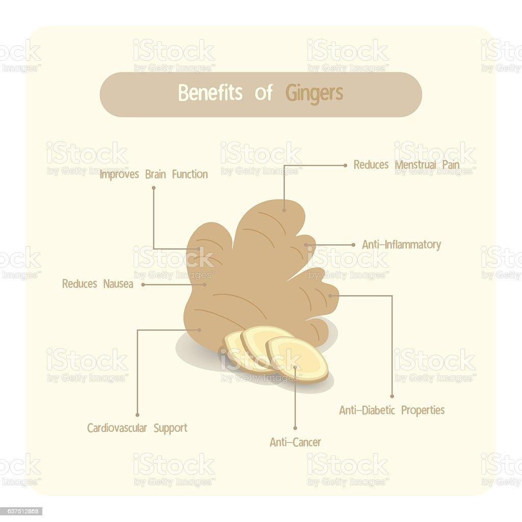 Infographic of ginger benefits vector art illustration