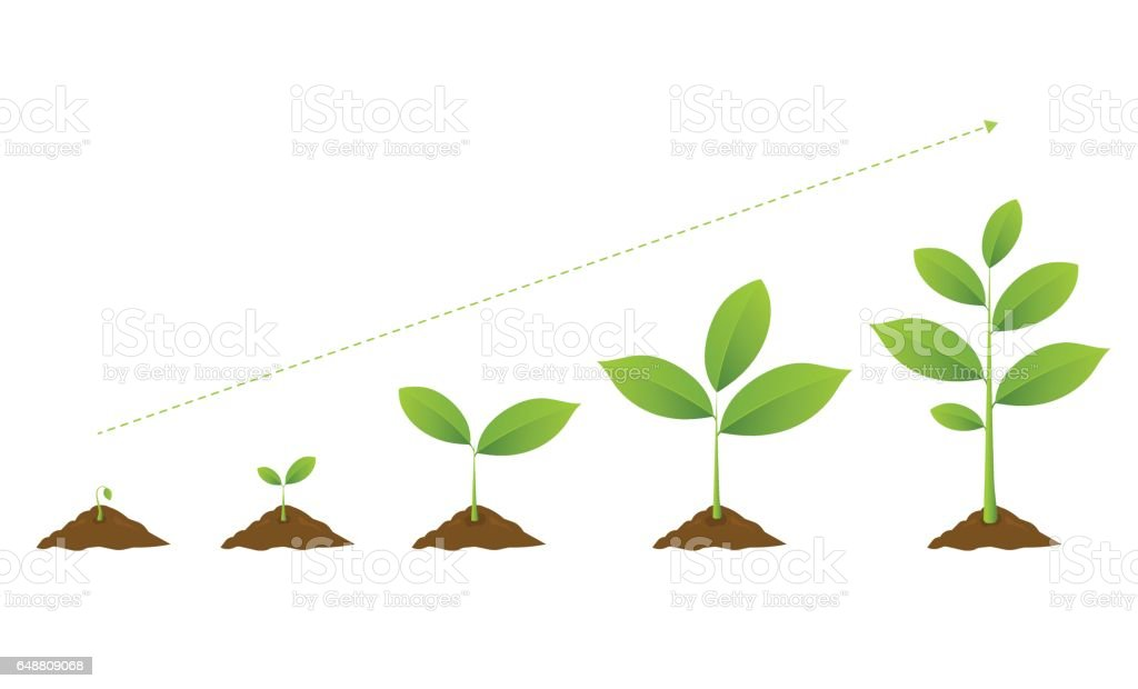 Infographic of planting tree. Seedling gardening plant.