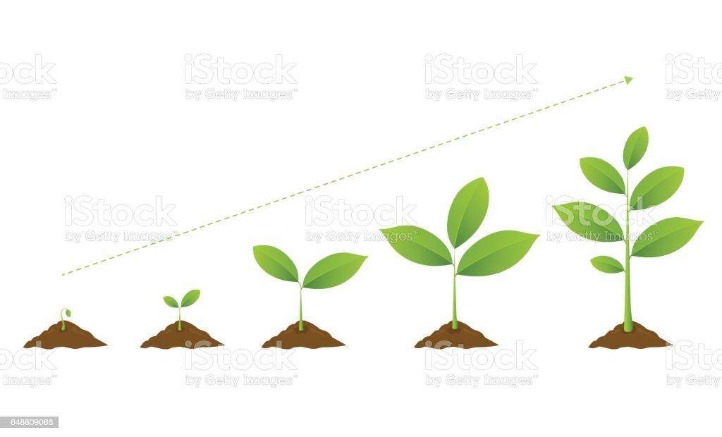 Infographic of planting tree. Seedling gardening plant. vector art illustration