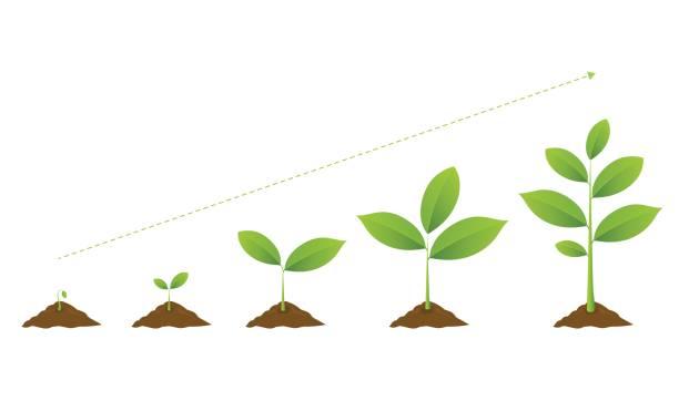 infographic of planting tree. seedling gardening plant. - plant stock illustrations, clip art, cartoons, & icons