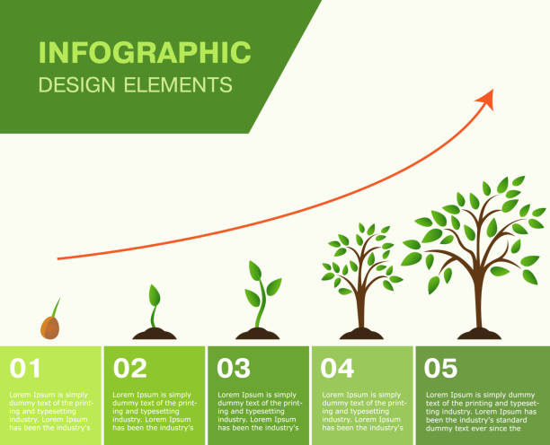 illustrazioni stock, clip art, cartoni animati e icone di tendenza di infographic of planting tree. seeds sprout in ground. - crescita
