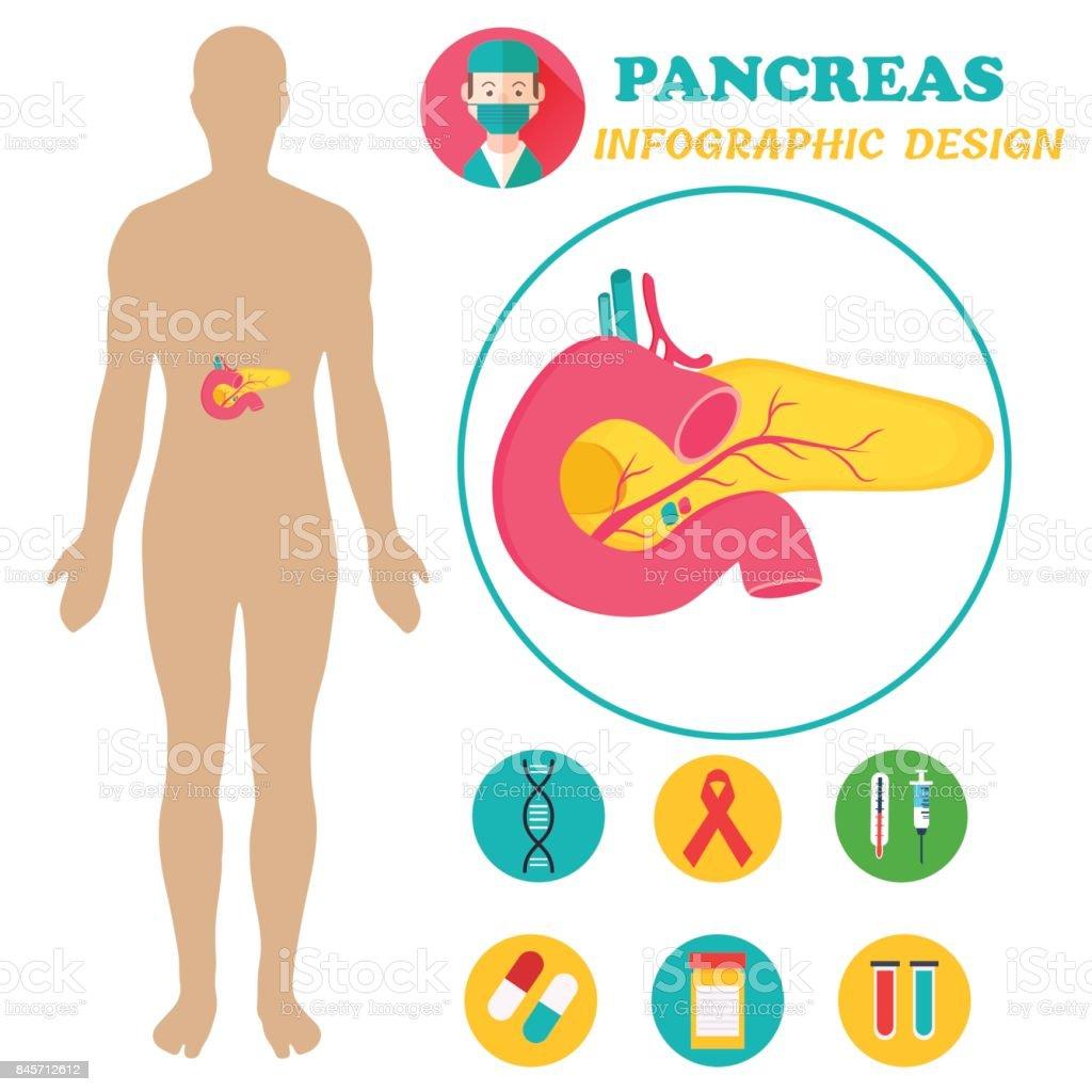 Ilustración de Infografía De Cartel Con La Imagen Del Páncreas Y El ...