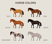infographic with main horse colors