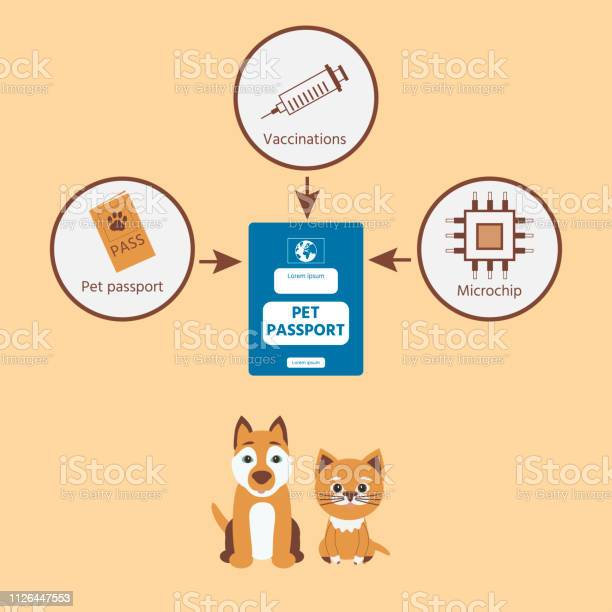 Infographics pet travel personal passport for travel with dog or cat vector id1126447553?b=1&k=6&m=1126447553&s=612x612&h=h2hoo 079pvcprghwad 3fmsw9y icm7kdhqq62ocno=