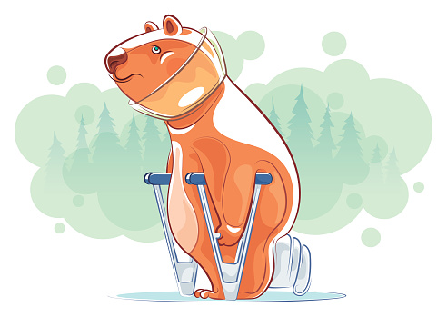 injured bear with crutches