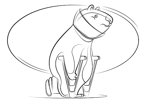 injured bear with crutches walking line drawing