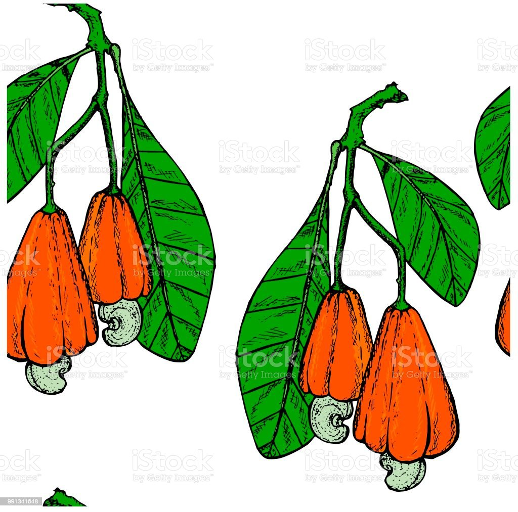 Ink Colored Cashew Tree Branch Seamless Pattern With Greed Leaves ...