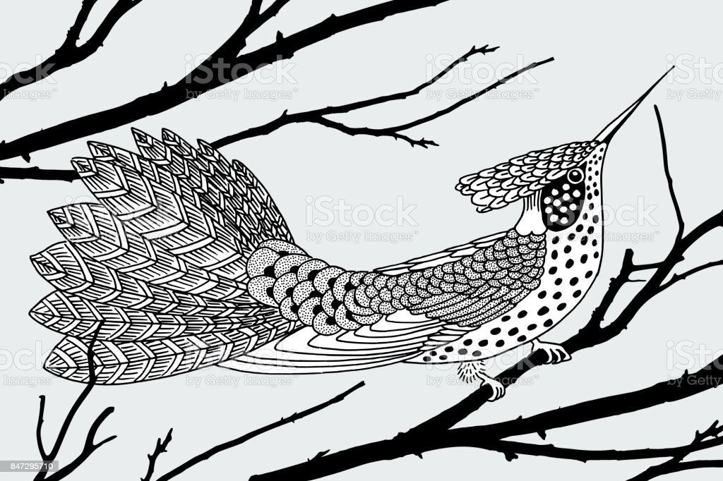 Ink drawing of a hummingbird vector art illustration