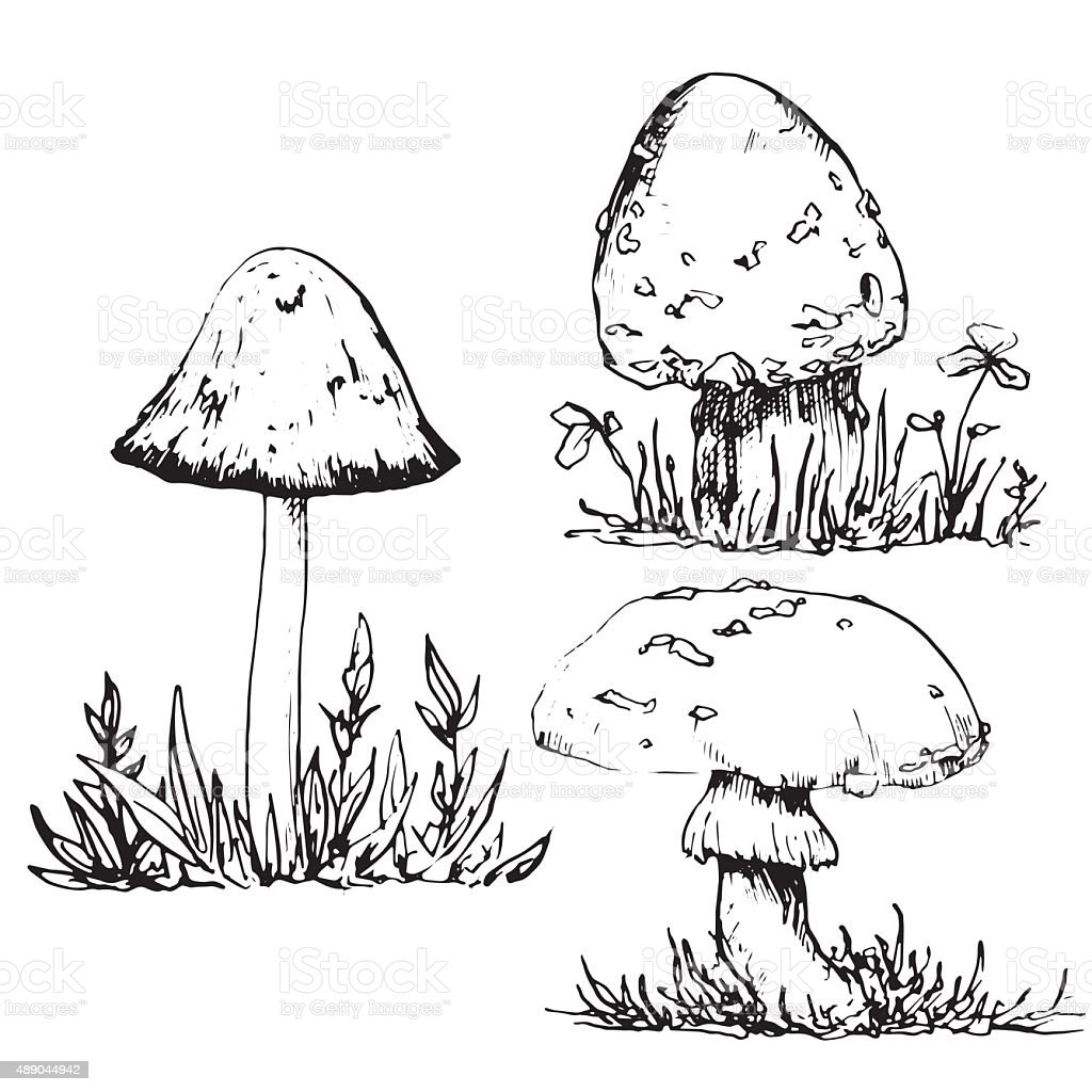 Ink Drawing Poisonous Mushrooms And Grass Stock Illustration