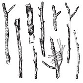 ink drawing wood twigs