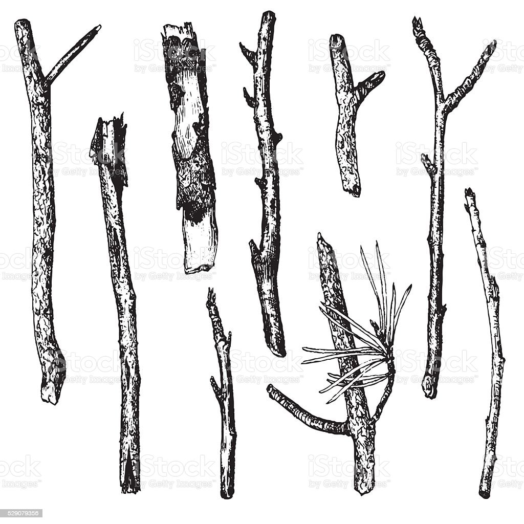 ink drawing wood twigs vector art illustration