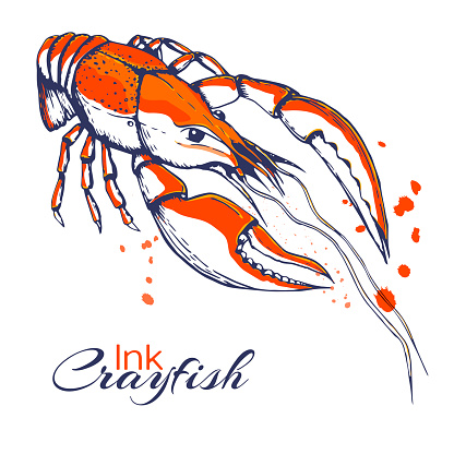 ink hand drawn crayfish concept for design or decoration. Ink spattered crawfish illustration. vector red boiled lobster drawn in ink. seafood concept with color splashes on white with place for text