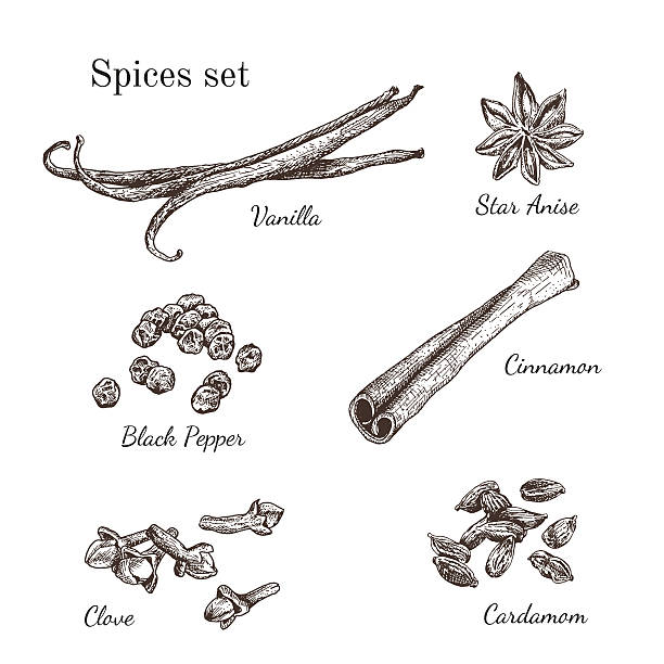 Ink hand drawn spices set Ink hand drawn spices set. Engraving style.  star anise stock illustrations