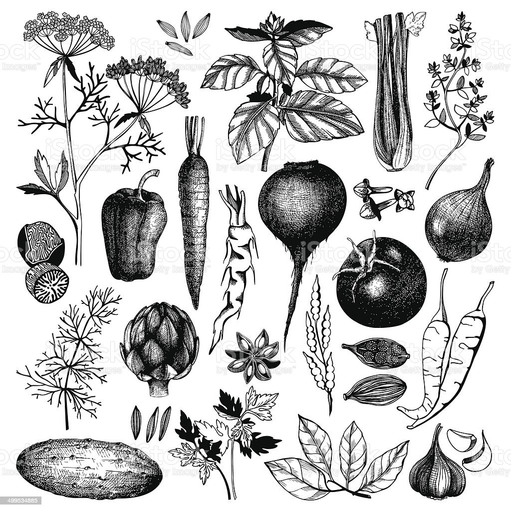 ink hand drawn vegetables, herbs and spices vector art illustration