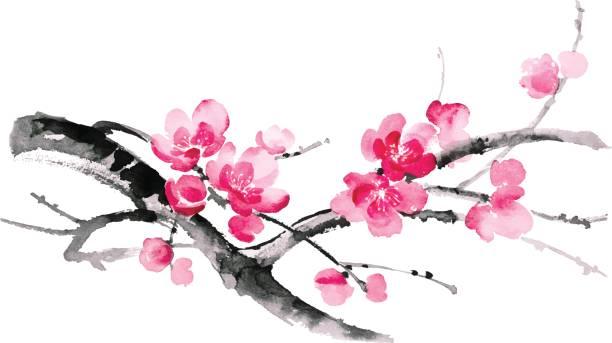 ilustracja z atramentem sakury. styl sumi-e. - gałąź część rośliny stock illustrations