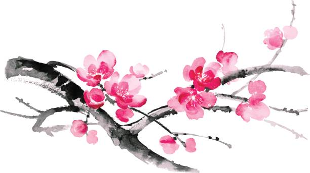 Ink illustration of sakura. Sumi-e style. Ink illustration of blooming branches of cherry. Sumi-e, u-sin, gohua painting style. Silhouette made up of brush strokes isolated on white background. branch plant part stock illustrations