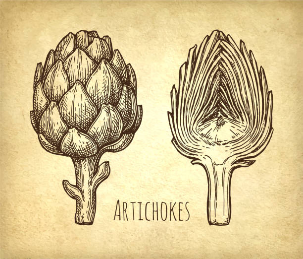 Ink sketch of artichokes. Ink sketch of artichokes. Hand drawn vector illustration on old paper background. Retro style. artichoke stock illustrations