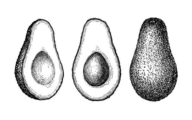Ink sketch of avocado. Ink sketch of avocado isolated on white background. Hand drawn vector illustration. Retro style. avocado stock illustrations
