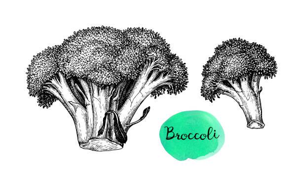 broccoli vector art graphics freevector com broccoli vector art graphics freevector com
