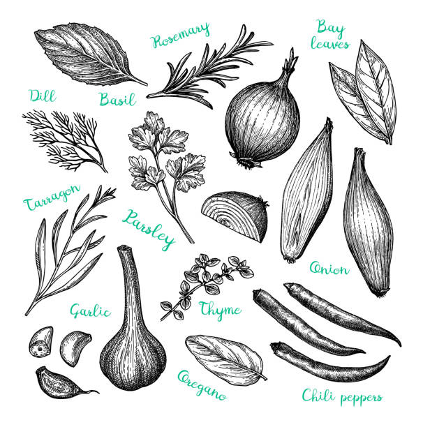 Ink sketch of cooking ingredients. Сooking ingredients. Ink sketch isolated on white background. Hand drawn vector illustration. Retro style. thyme stock illustrations