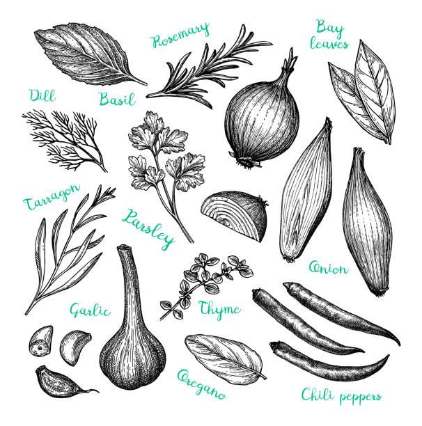 illustrazioni stock, clip art, cartoni animati e icone di tendenza di ink sketch of cooking ingredients. - aglio cipolla isolated